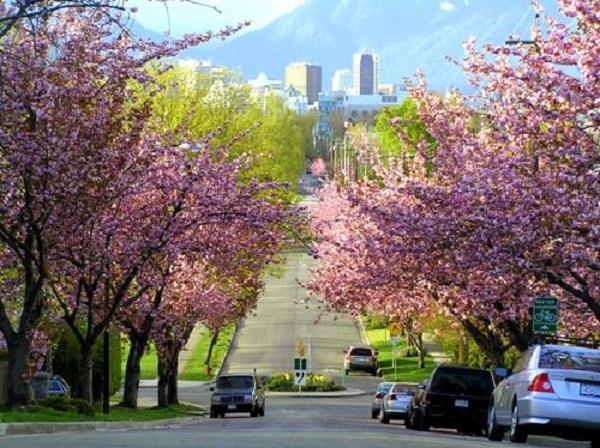Những Điều Tuyệt Vời Về Cuộc Sống Ở Calgary Canada 4